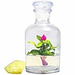 mini desk terrarium with a flower