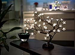 Blossom bonsai light