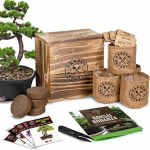 bonsai tree seed starter kit