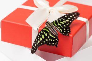 butterfly on a present
