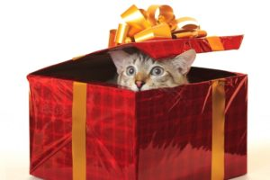 cat getting out of a wrapped present