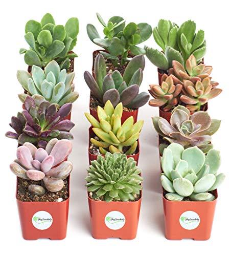 collection succulent plants