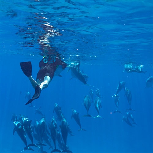 dolphin and snorkel tour