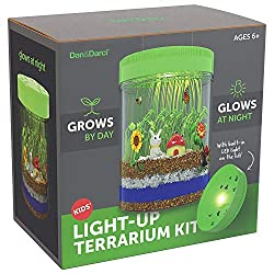 light- up terrarium kit