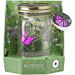 butterfly in a jar