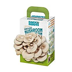 mini mushroom grow kit