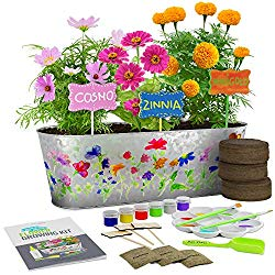 plant flower growing kit