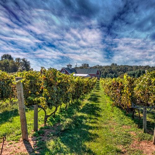 private wine education tour