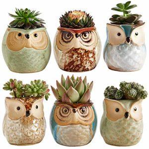 succulent/cactus plant pots