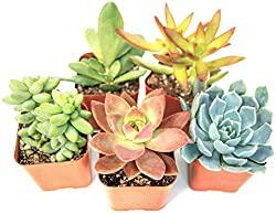 succulent plants pack